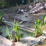 Water feature Construction