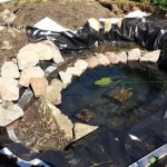 Filling pond and bog garden