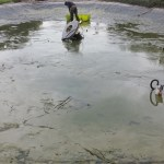 \large pond clean Bristol
