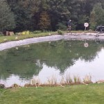 Pond improvements in Bristol