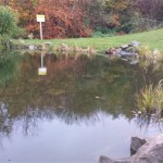 Commercial pond maintenance