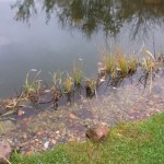 Professional pond installers