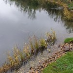 Professional pond filtration installers