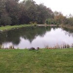 Profession pond filter design, supply and installation