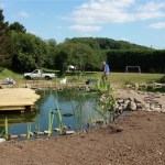 Aquatic plants are positioned