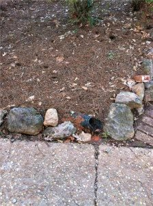 foundation viewed outside the residential home