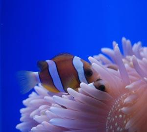 Интернетмагазин аквариумистики AquaShop всё для аквариума