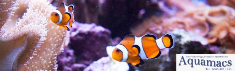 about-us-aquariums