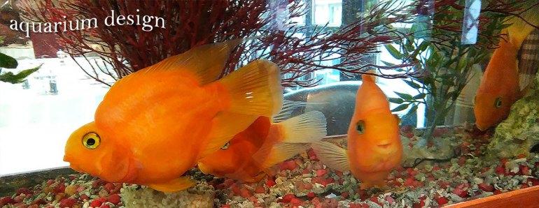 Aquariums for doctors waiting rooms