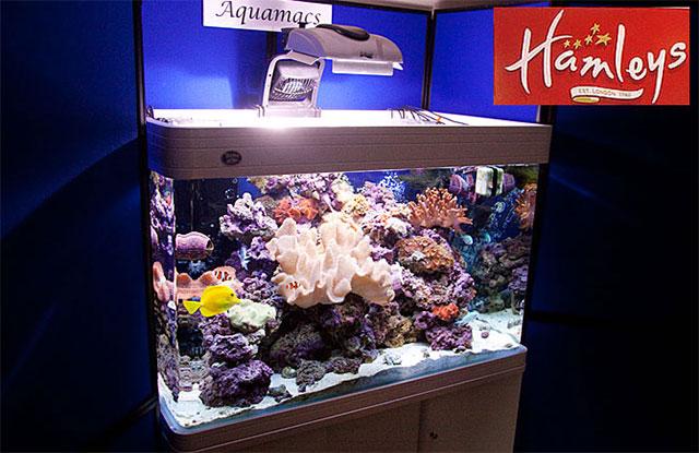 hamleys-aquarium