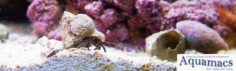 types-of-aquarium