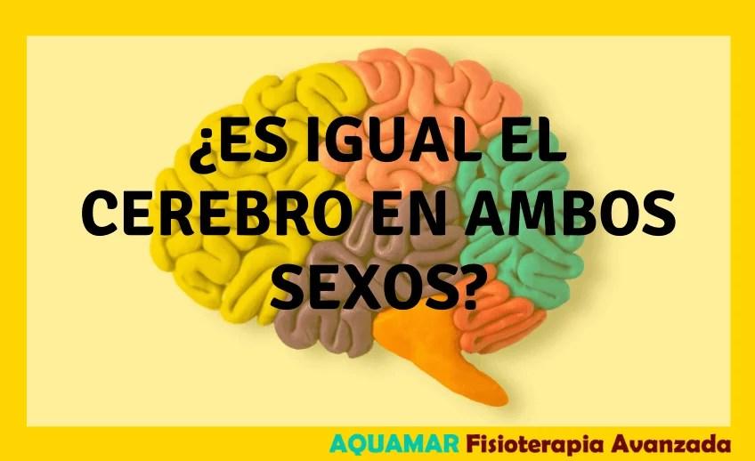 curiosidades cerebro humano