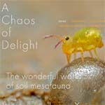 Chaos of delight