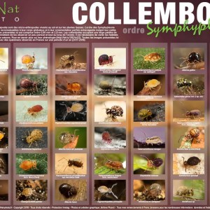 Poster Collemboles – Collection N°2 Format A2