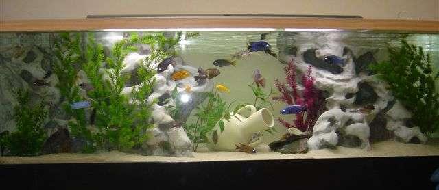 aquarium 230 x 60 x 65 decor pierre blanche