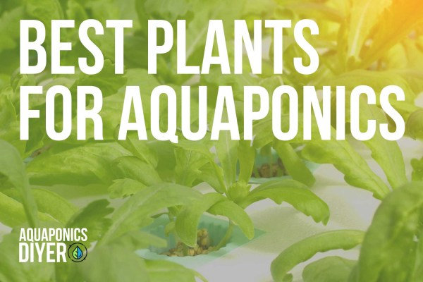 best plants for aquaponics