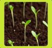 Bio Seeds