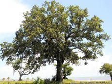 """Résultat de recherche d'images pour """"image arbre"""""""