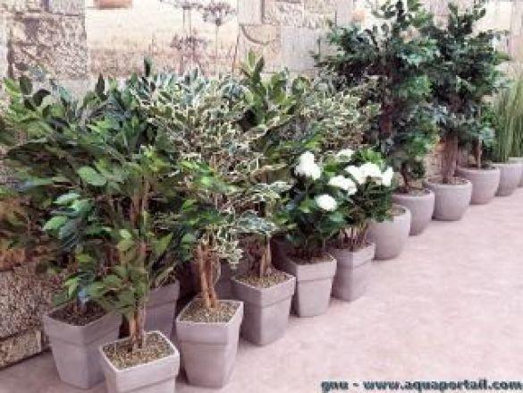 Des plantes artificielles d'extérieur