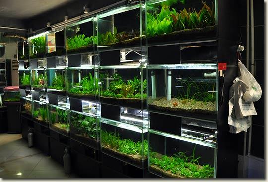Aquarium Plants Online Purchase
