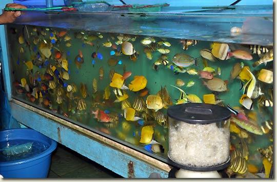 Aquatic Plants Sale Online