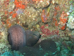 this moray seems to discover the secret of the gordian knot