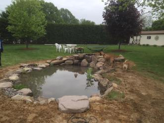 Image result for fishpond with grass
