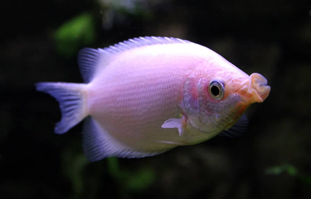 The 8 Worst Beginner Fish Aquariadise