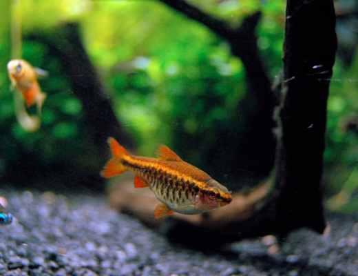 easy schooling fish
