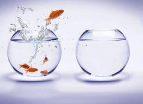 Vissenkom: de juiste vissen, schoonmaken en veel meer goede info!