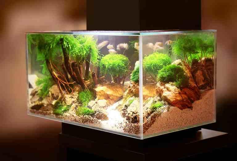Aquarium using the best aquarium safe silicone to seal the edges