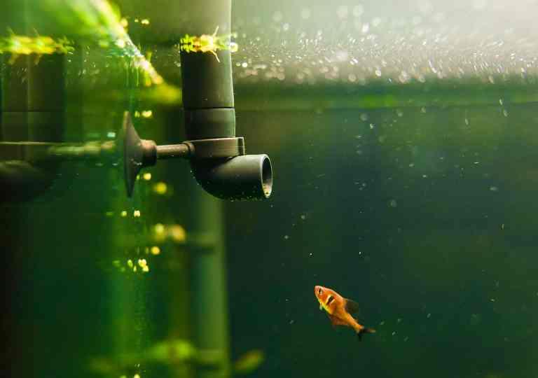 canister filter keeps aquarium clean