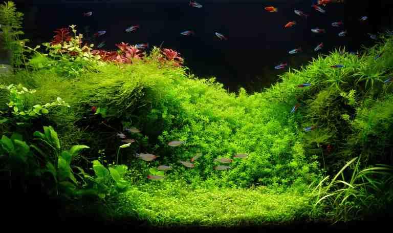 Beautiful planted and painted aquarium using aquarium safe paint