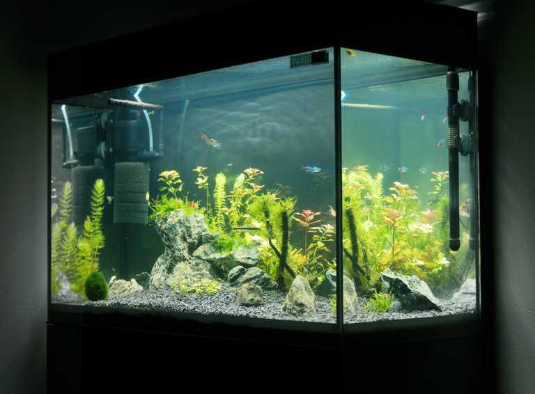 Aquarium with aquarium temperature controller