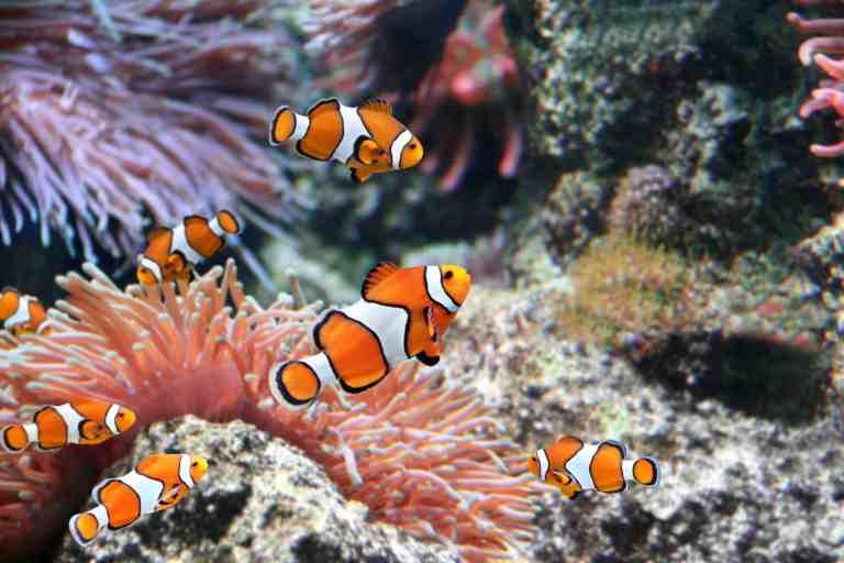 saltwater aquarium with best biopellet reactor to keep nitrates down