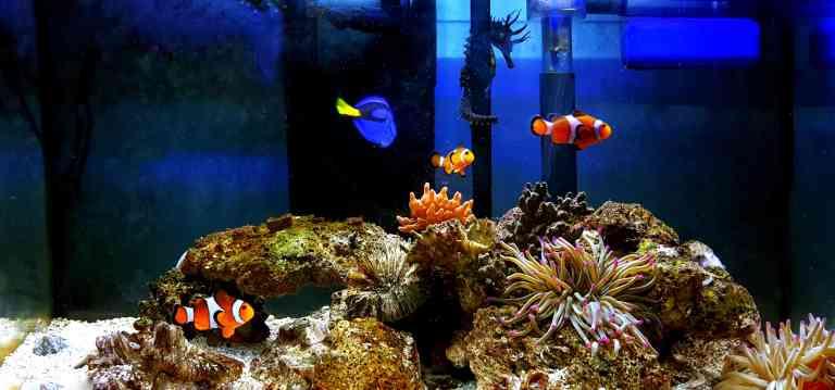 Aquarium wave maker in saltwater tank with corals