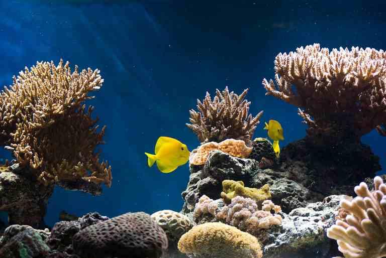 Saltwater aquarium using the best aquarium wave maker