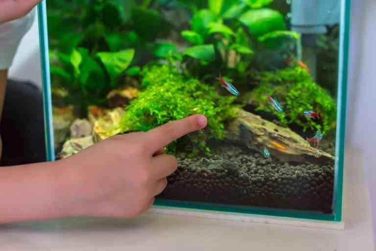 Best nano aquarium tank with neon tetras