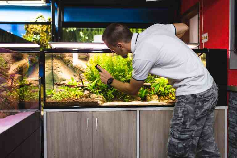 How to clean an aquarium the best way