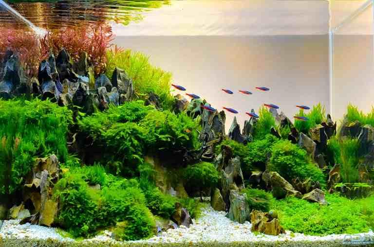 Seiryu stone in nature aquascape