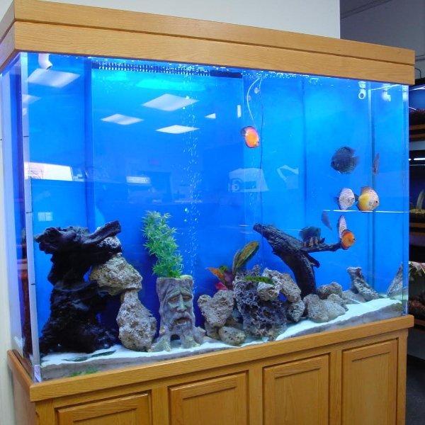 Aquarium Shine | Fresh Water Aquariums | Michigan | Aquarium