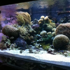 aquarium shine maintenance