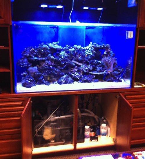 aquarium shine