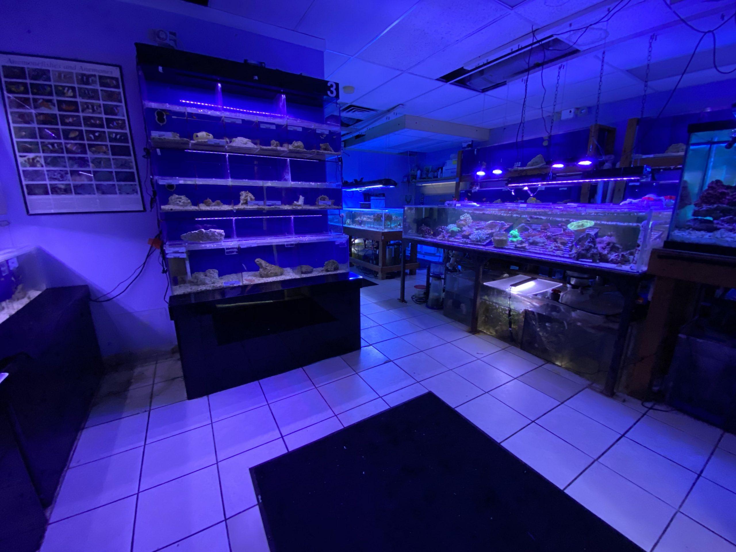 aquarium shine livestock