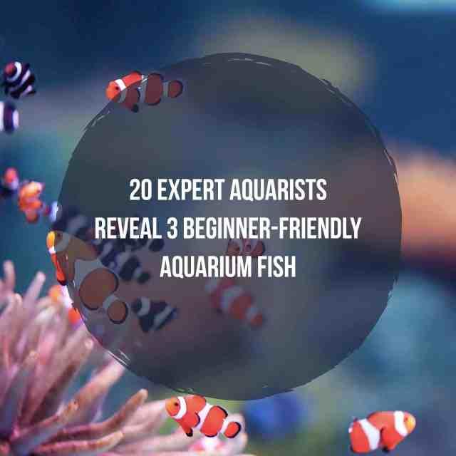 aquarium fish guide