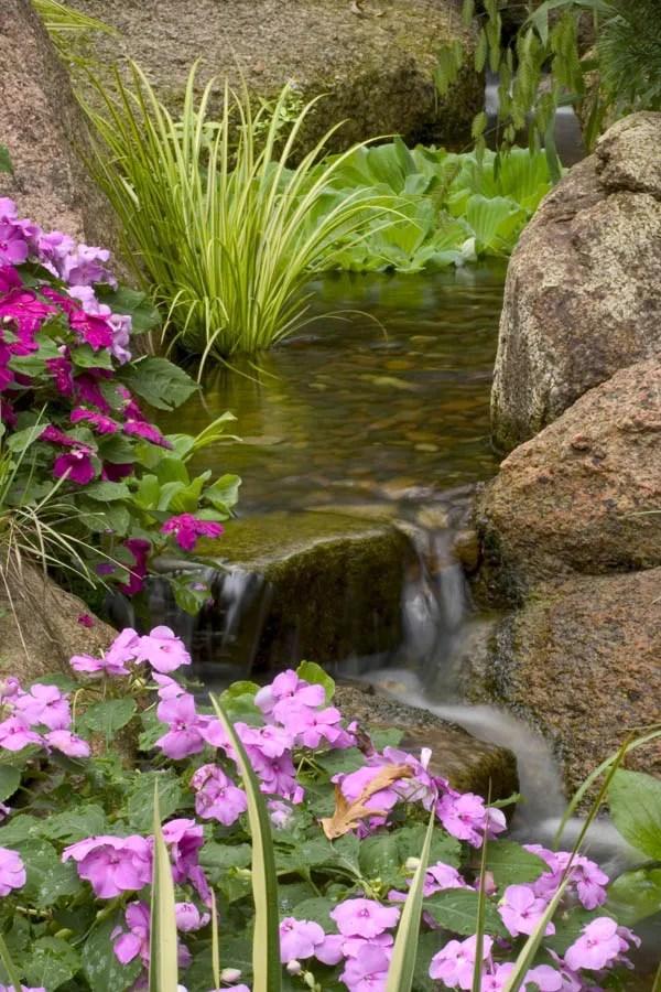 Small Pond Plant Ideas