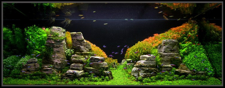 January 2011 Aquascape of the Month: Peruvian Nights ...