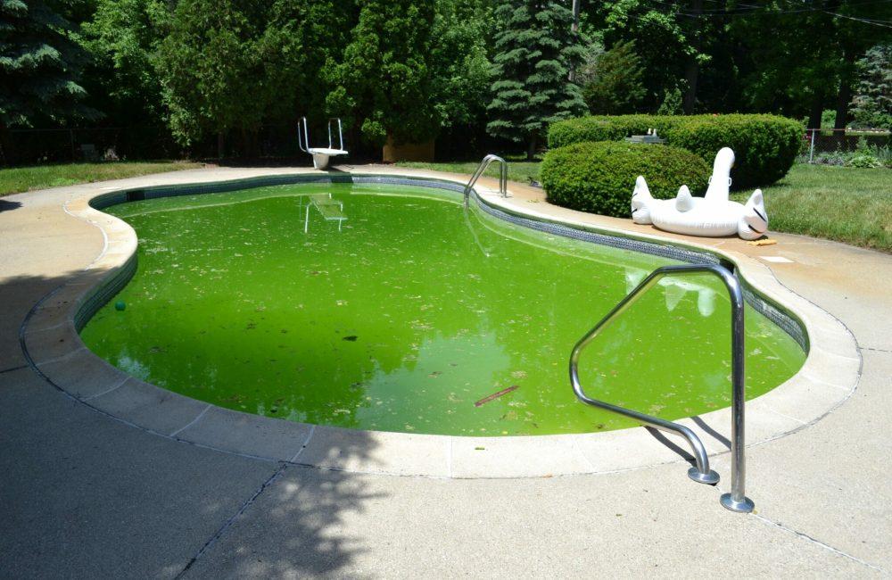 Groen zwembad water