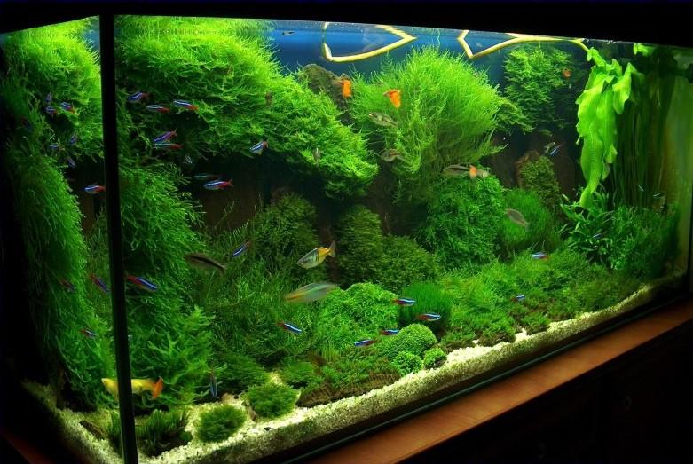 Aquatic Plants Betta