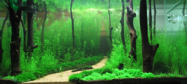 photo regarding Aquarium Backgrounds Printable identify printable fish tank backgrounds -
